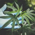 Launching a Cannabis Business: The Common Questions Most People Ask