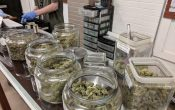 3 Benefits of Growing Your Marijuana Indoors